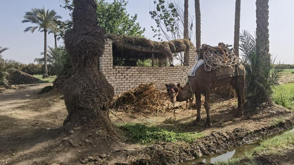 Egyptský venkov   Foto: Soukromý archiv Jitky Švaříčkové