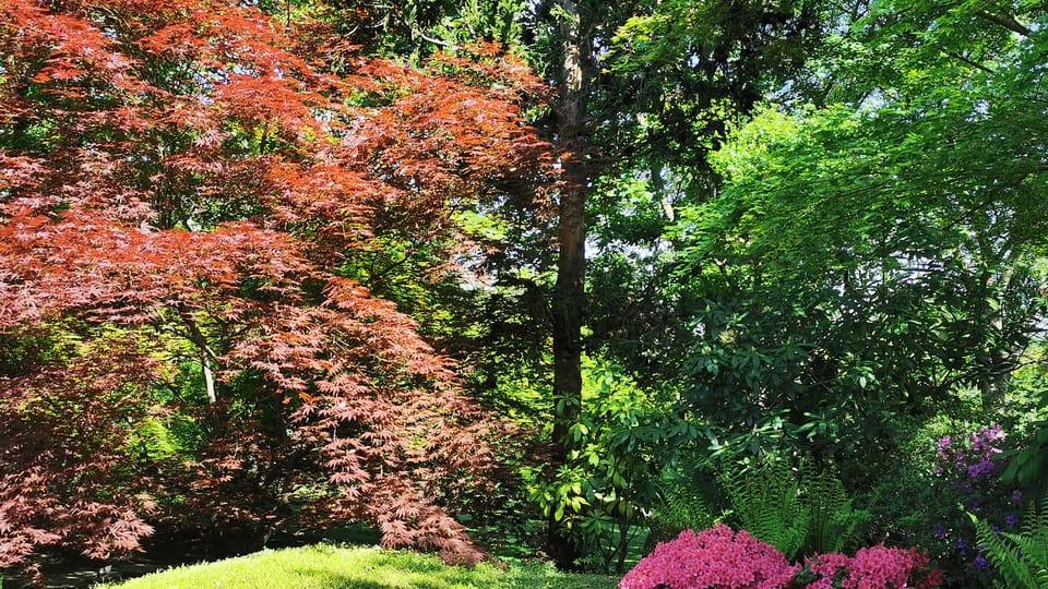 Botanická zahrada hl. m. Prahy,  foto: Klára Stejskalová