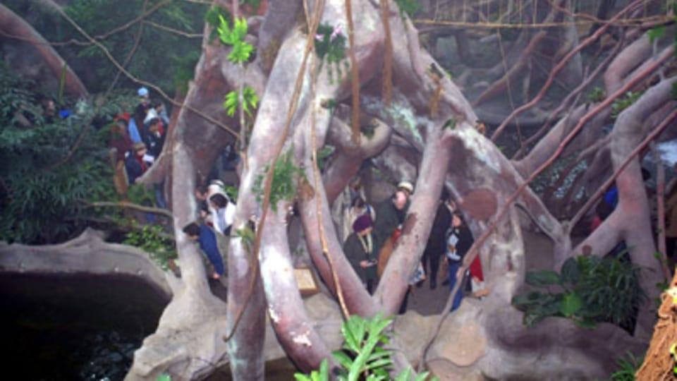 Indonéská džungle v pražské zoo