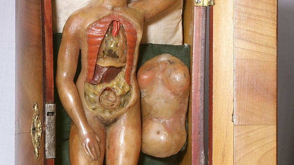 Voskový model rodičky k výuce mediků,  po roce 1700  (ze sbírek Zdravotnického muzea)