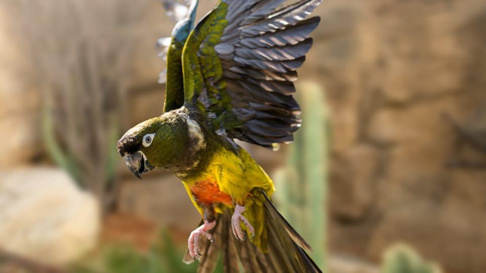Papoušek patagonský chilský,  foto: Petr Hamerník,  archiv Zoo Praha
