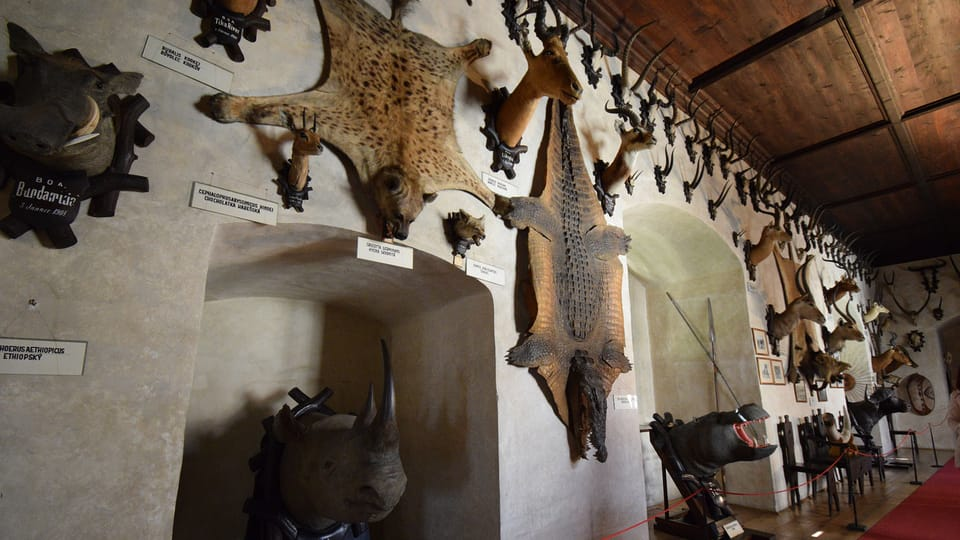 Lovecký salonek na zámku v Telči,  foto: Ondřej Tomšů