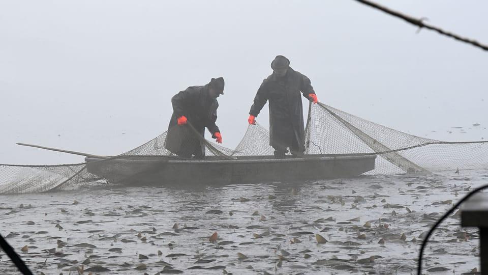 Výlov rybníka Krčín,  foto: Ondřej Tomšů