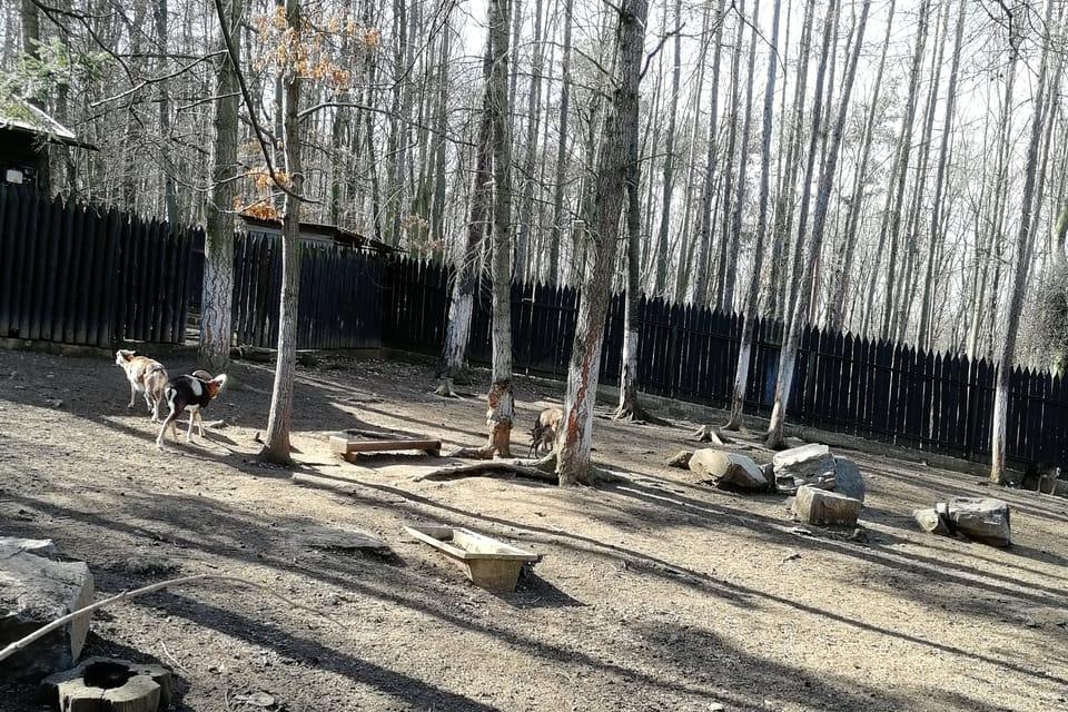 Zookoutek v Chuchelském háji,  foto: Štěpánka Budková