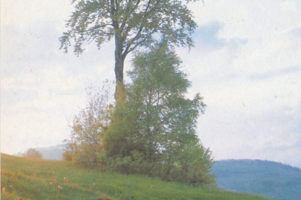 QSL  1992,  orchideje | Foto: APF Český rozhlas
