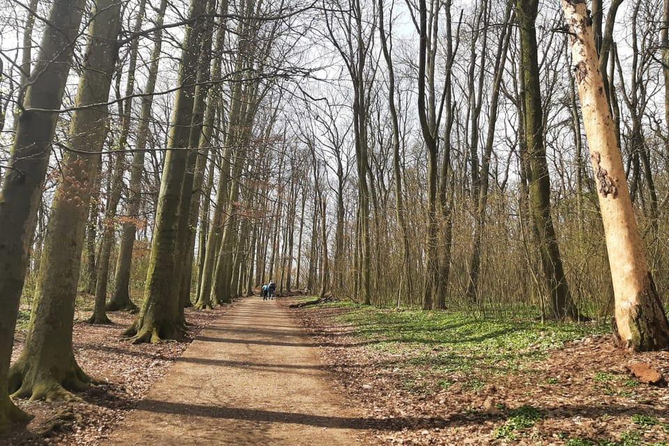 Jarní procházka na Říp | Foto: Lenka Žižková,  Radio Prague International