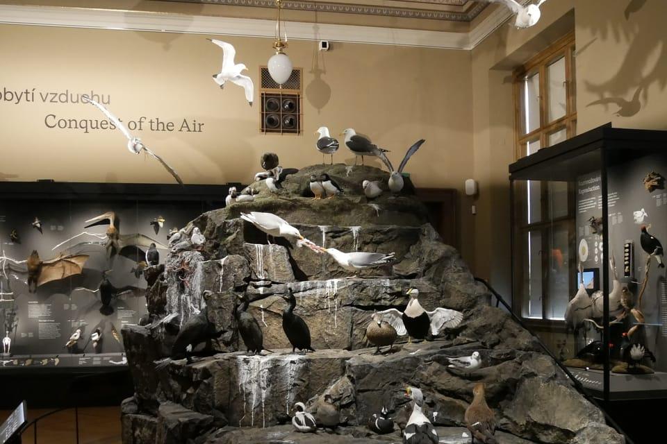 Výstava 'Zázraky evoluce' v Národním muzeu | Foto: Zoé Samin,  Radio Prague International